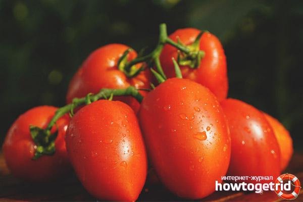 Время высаживания томата Дино F1
