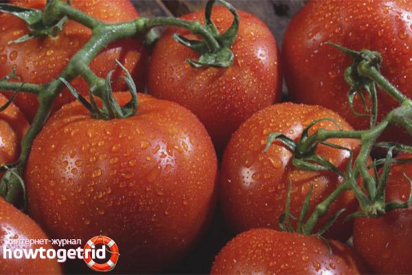 Выращивание томатов Катрина F1