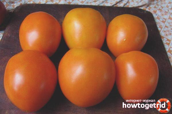 Выращивание томатов Золотые яйца