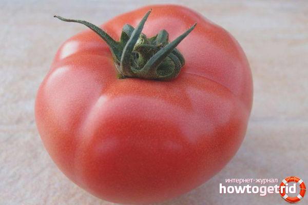 Достоинства томатов Пинк клер F1