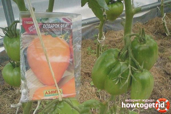 Формирование томатов Подарок феи