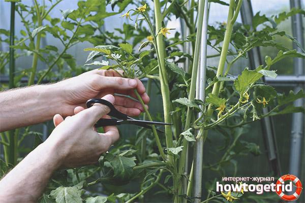 Формирование томатов Туз