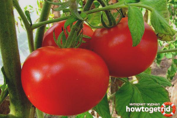 Как хранить плоды томатов сорта Красные щечки