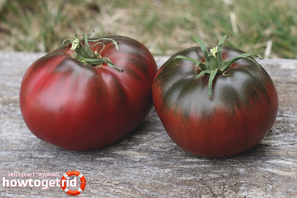 Как выращивать томаты Поль Робсон
