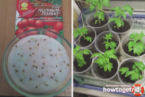 Особенности агротехники томата Полным-полно