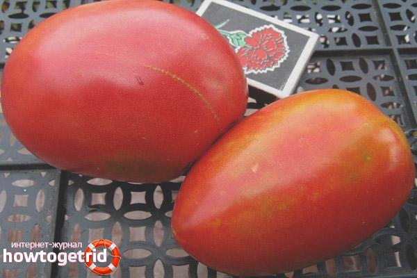 Особенности выращивания томатов Натали