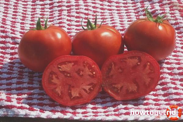 Преимущества сорта томатов Мальчик с пальчик
