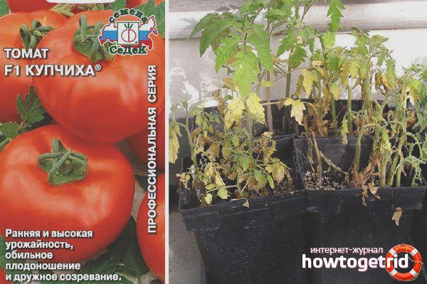 Рекомендации по выращиванию томатов Купчиха
