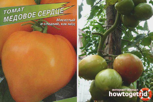 Рекомендации по выращиванию томатов Медовое сердце