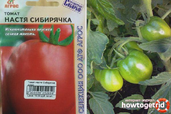 Томат Настя сибирячка