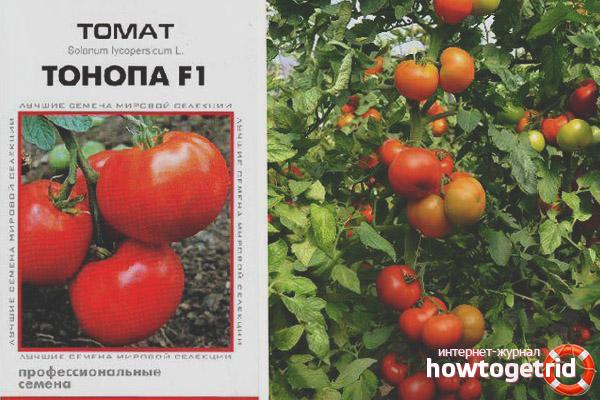 Томат Тонопа F1
