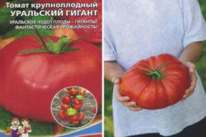 Томат Уральский гигант
