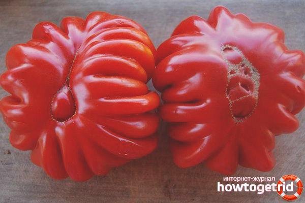 Уход за томатами Лотарингская красавица