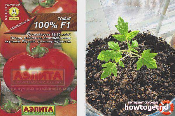 Выращивание томатов 100 процентов