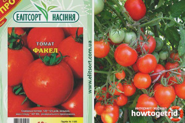 Выращивание томатов Факел