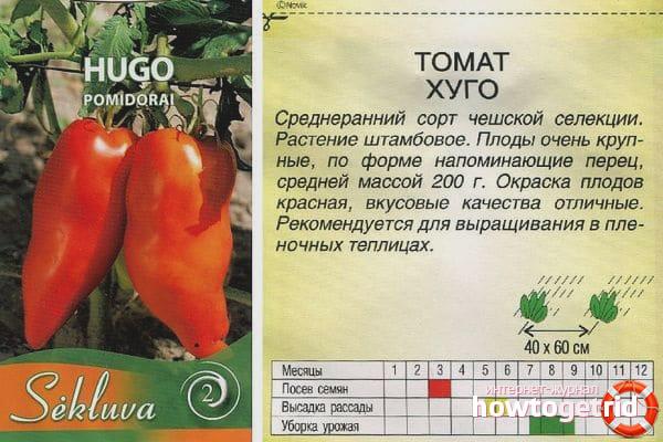 Выращивание томатов Томат Хуго