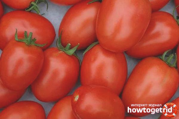 Выращивание томатов Лагидный