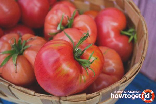Выращивание томатов Малиновая сладость F1