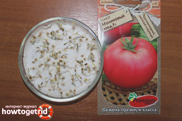 Выращивание томатов Малиновый мед