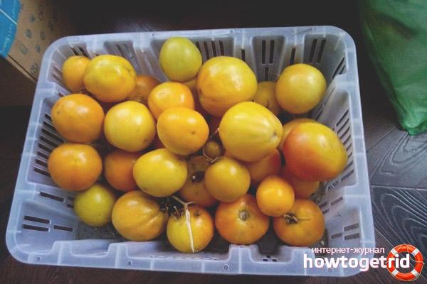 Выращивание томатов Новогодний