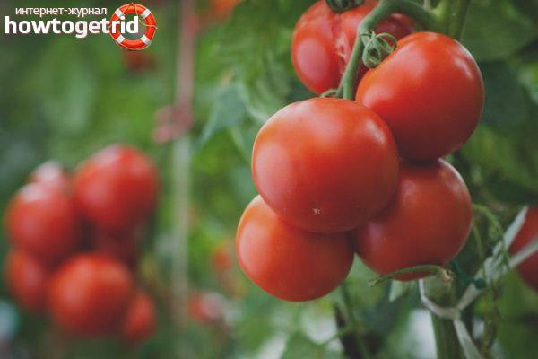 Выращивание томатов Сервер F1