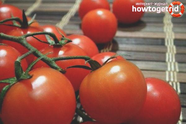 Выращивание томатов Тамина