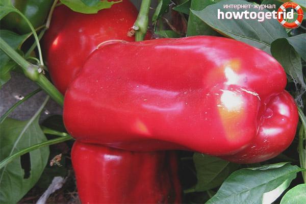 Как выращивать перец сорта Атлантик