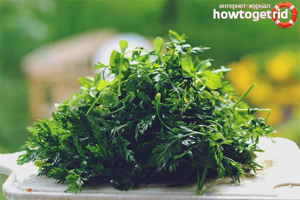 Полезные рецепты с листьями моркови