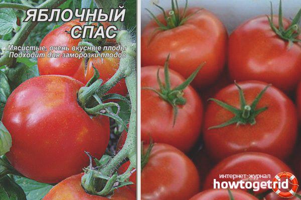 Томат Яблочный спас