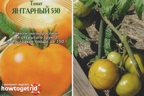 Томат Янтарный 530