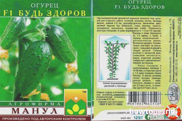 Выращивание огурцов сорта Будь здоров