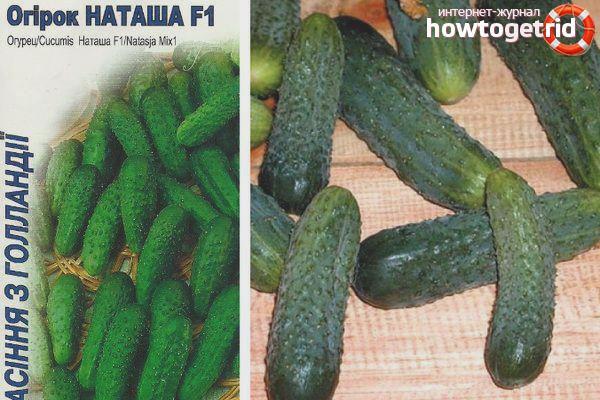 Выращивание огурцов сорта Наташа