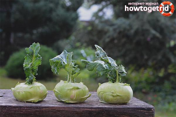 Как хранить капусту кольраби