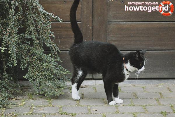 Когда коты начинают метить территорию