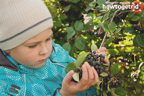 Можно ли детям черноплодную рябину