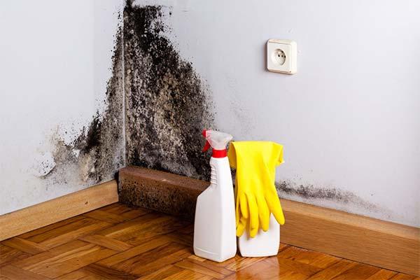 Как избавиться от плесени в квартире