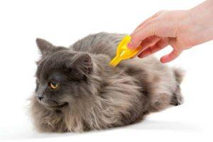 Как обрабатывать кошек от клещей и паразитов